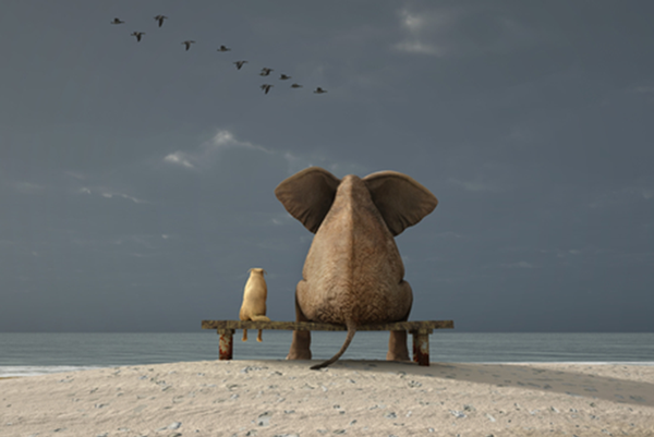 Elephants2_InvolvePage